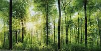 Фотообои   с природой лес размер 204 х 392 см