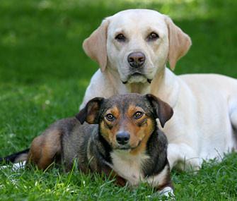 Лечебный корм для собак с ожирением Hills Diet r/d