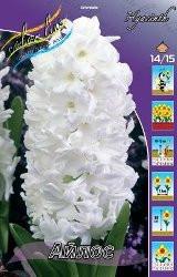 Гиацинты белый