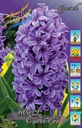 Гиацинты фиолетовый мисс Сайгон