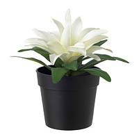 """IKEA """"ФЕЙКА"""" Искусственное растение в горшке, Бромелия белый, 9 см"""