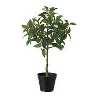 """IKEA """"ФЕЙКА"""" Искусственное растение в горшке, перец, 12 см"""