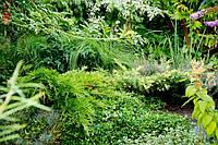 Саженцы декоративных растений