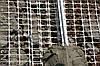 Сетка для армирования стяжки РФ-2