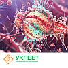 Тест-система для выявления инфекционной бурсальной болезни