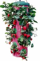 Устройство для выращивания клубники - плантатор