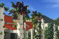 К слову о необычных ресторанах, грядках с овощами на крышах и в интерьере!