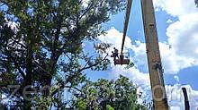 Удалить дерево в Харькове