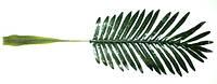 Лист пальмы 75 см