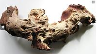 Коряга Мопани в террариум средний размер