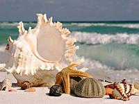 "Картина для рисования камнями Diamond painting Алмазная вышивка ""Море ракушки"""