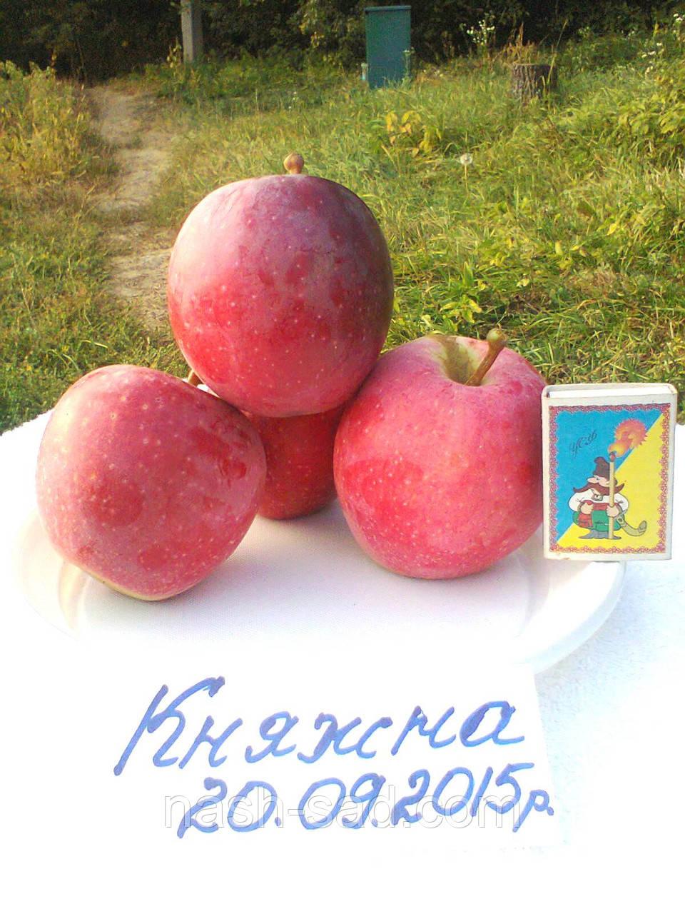 Саженцы яблони Княжна (Украина)