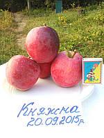 Саженец яблони Княжна (Украина)