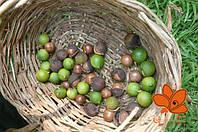 Масло Макадамии (австралийского ореха) 60 мл