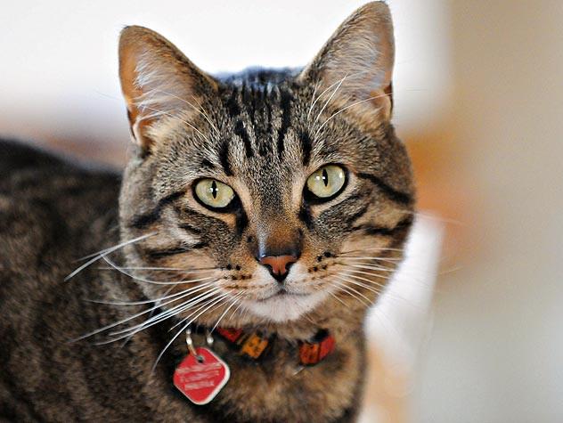 Корм для кошек с лишним весом Orijen Fit & Trim