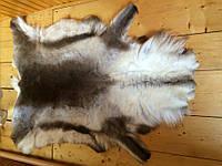 Шкура оленя (Северного)