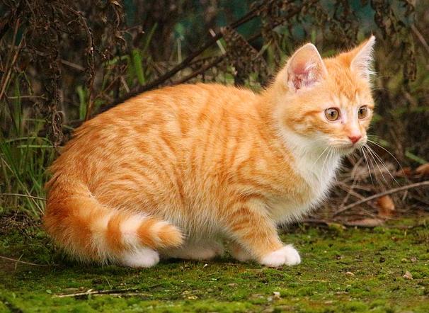 Корм для кошек и котят с рыбой Orijen Cat & Kitten