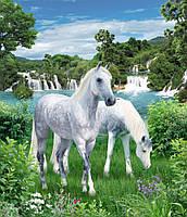 Фотообои на стену с лошадьми Идиллия