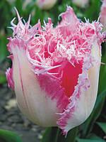 Тюльпан бахромчатый Huis ten Bosch (Хаюс тен Бош) 3 шт./уп.