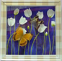 Картина бабочки 320х320х30