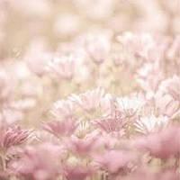 Отдушка для кондиционера для белья Floral Soft, 1 литр