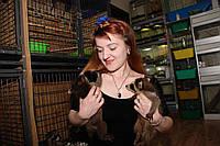 Енот полоскун - самый популярный любимец этого года