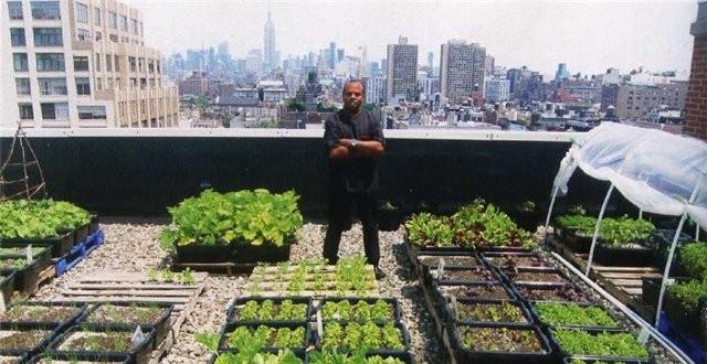 Вслед за ресторанами, идею выращивать овощи на крыше  подхватили и супермаркеты.