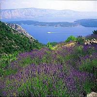 В Хорватии продают острова