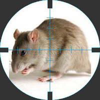 Уничтожить крыс и мышей