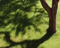 Семена газонной травы ТЕНЕВОЙ ГАЗОН
