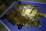 Екзотична коров'яча шкіра чорного кольору з потертостями золотом Харкові, фото 3