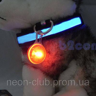 Светящийся брелок с карабином на ошейник, оранжевый - MIR 212 в Днепре