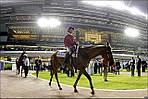 ОАЭ - THE MEYDAN HOTEL 5*, Дубаи - первый в мире отель при конно-спортивном комплексе!, фото 4