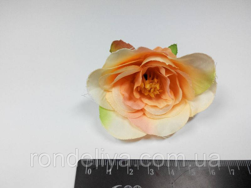 Квітка абрикосовий