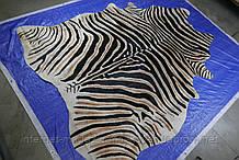 Точная копия рисунка африканской зебры на шкуре коровы
