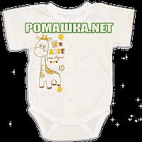 Детский боди-футболка р. 62 ткань КУЛИР 100% тонкий хлопок ТМ Алекс 3087 Бежевый-1