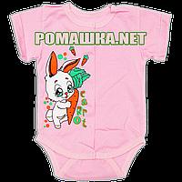 Детский боди-футболка р. 56 ткань КУЛИР 100% тонкий хлопок ТМ Алекс 3087 Розовый-2