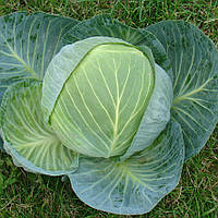 Капуста средне-поздняя Центурион F1 20 семян, фото 1