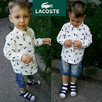 """Детская красивая рубашка """"Лакоста"""" для мальчика"""