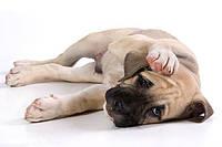 Средства против блох и клещей для собак
