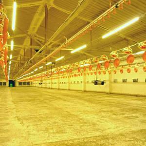 системы освещения для животноводства