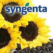 Семена подсолнечника Cингента (Syngenta)