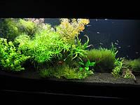 Эксклюзивный аквариум с живыми прихотливыми растениями (подача СО2)