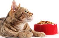 Корм для кошек сухой