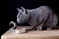 Консервы и влажный корм для кошек