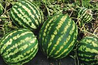 Арбуз Арашан(ВДЛ5003) F1 1000 семян