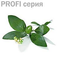 Жожоба(базовое/жирное масло)  Simmondsia californica 100мл