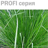 Эфирное масло ветивер Vetiveria zizanioides 5 мл