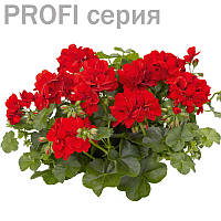 Эфирное масло Герани Pelargonium graveolens 5мл