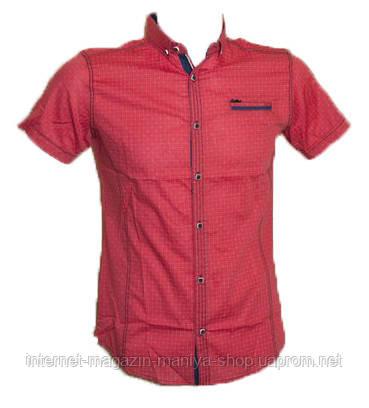 Рубашка мужская Punto, приталенный крой